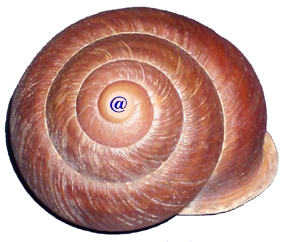 Caracol epiceno hermafrodita